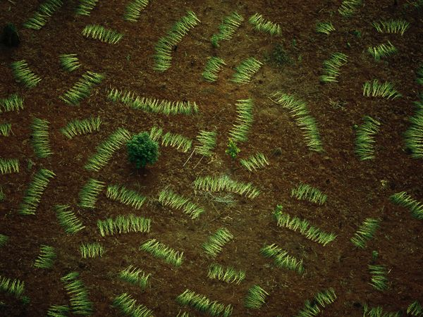 drying-fronds_9352_600x450