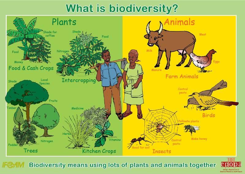 1.01-what-is-biodiversity