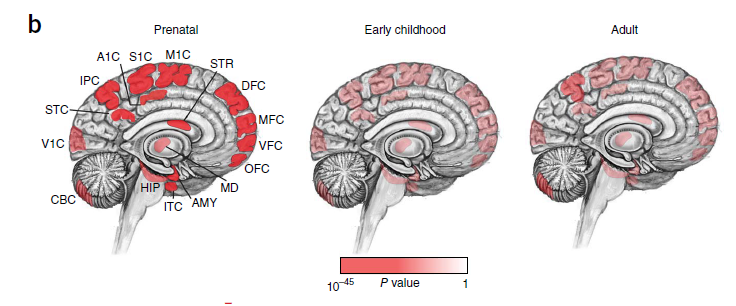 Νέα αλγόριθμος θα βοηθήσει στην πρόβλεψη για το ποιες γενετικές μεταλλάξεις οδηγούν σε αυτισμό, socialpolicy.gr