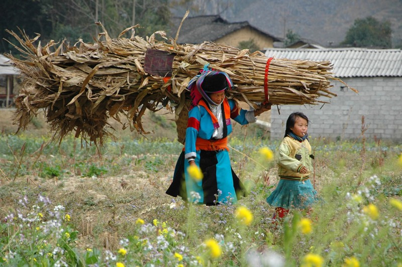 A mother and her daugther are seen walking through a field carrying a heavy load of dried corn crop leaves in the Ha Giang Province of Vietnam. Photo: UNDP/Canh Tang