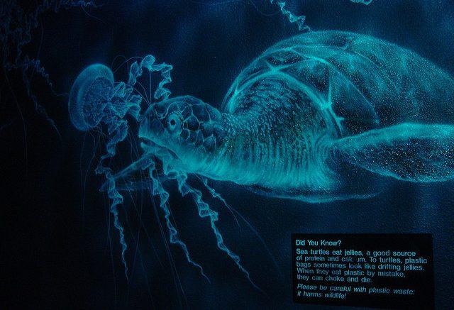 Σε πρωτόγνωρους ρυθμούς η κατανάλωση πλαστικών σακούλων απο τις θαλάσσιες χελώνες, socialpolicy.gr