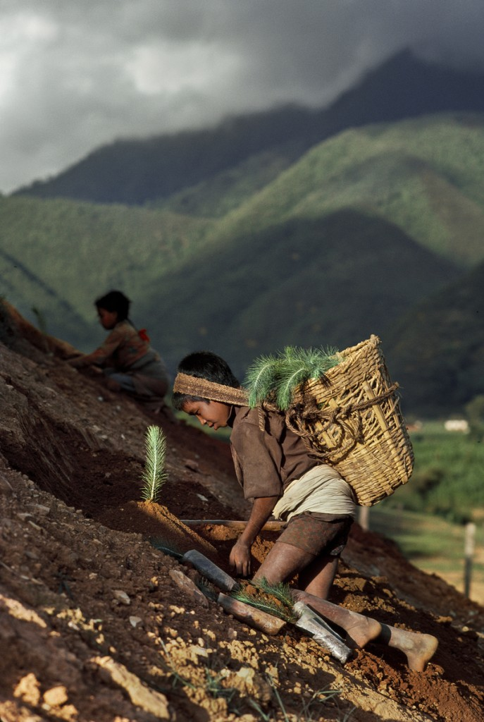 A young boy works on a mountainside.