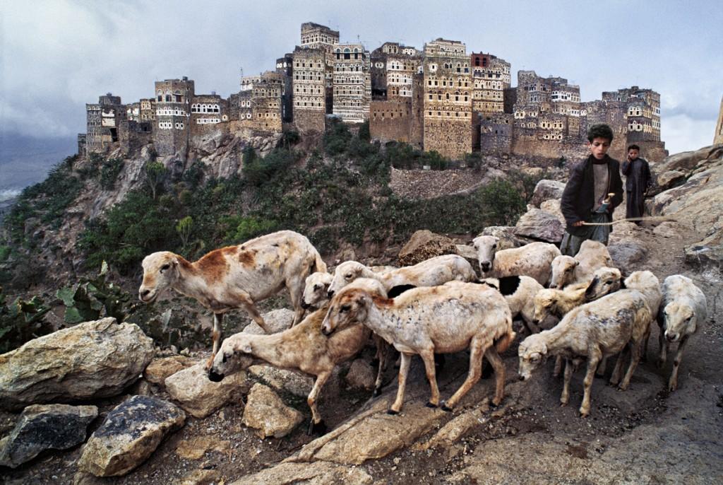 YEMEN-10052NF, Hajjah, Yemen, 1999. A shepherd boy tends to his flock.
