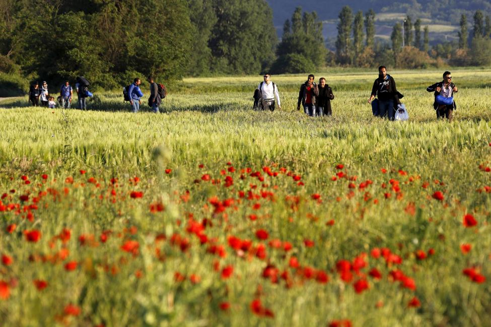 A group of Syrian immigrants walk through a field close to the Greek-Macedonian border in an attempt to flee to Macedonia from the border village of Idomeni in Kilkis prefecture May 13, 2015. REUTERS/Yannis Behrakis