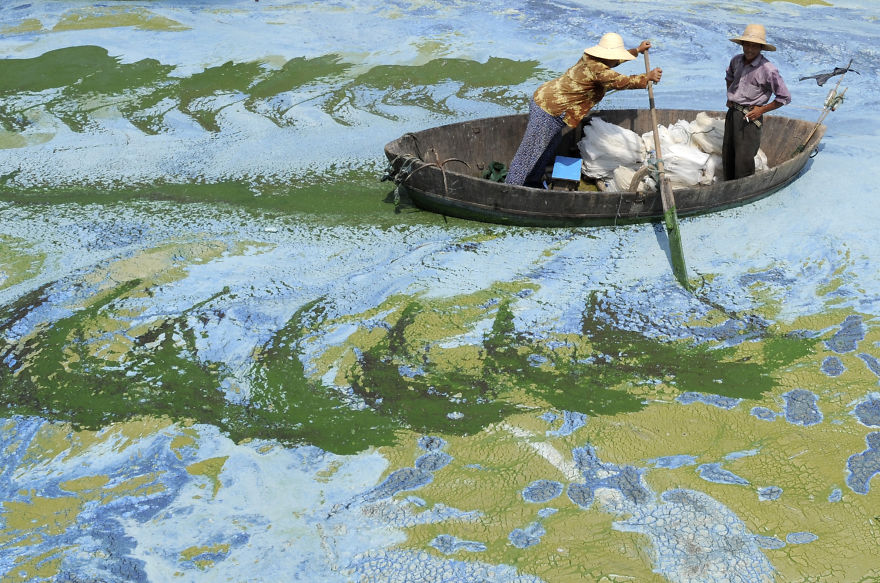 Fishermen row a boat in the algae-filled Chaohu Lake in Hefei, Anhui province, June 19, 2009. The country has invested 51 billion yuan ($7.4 billion) towards the construction of 2,712 projects for the treatment of eight rivers and lakes including Huaihe River, Haihe River, Liaohe River, Chaohu Lake, Dianchi Lake, Songhua River, the Three Gorges region of the Yangtze River and its upstream area, Xinhua News Agency reported. REUTERS/Jianan Yu (CHINA ENVIRONMENT SOCIETY BUSINESS IMAGES OF THE DAY) FOR BEST QUALITY IMAGE ALSO SEE: GM1E57T19EY01 - RTR24T8T