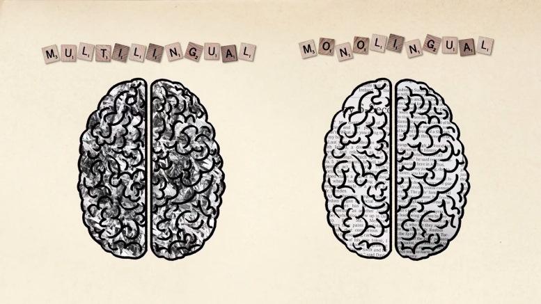 Τα οφέλη της διγλωσσίας στον εγκέφαλο