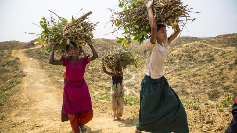 Πολλές γυναίκες πρόσφυγες κινδυνεύουν από σεξουαλική βία ακόμα και σε βασικές καθημερινές ασχολίες τους όπως το να φέρουν νερό και ξύλα.  © UNHCR/Roger Arnold