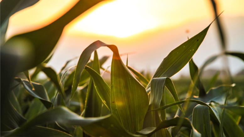 βιώσιμη-γεωργία-αγροτική-ανάπτυξη